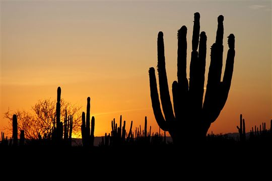 Sunset falling on a Mexican Desert. Photo by Tomas Castelazo via Wikimedia Commons