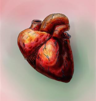 The Human Heart. Flickr