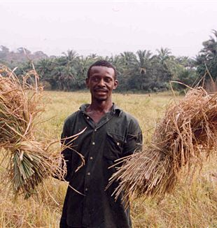 Rice farmer in Sierra Leone. Wikimedia Commons